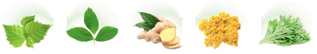 Bactefort - ingredientes - funciona - como tomar