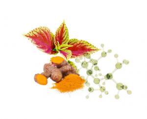 Turmeric Forskolin - ingredientes - funciona - como tomar