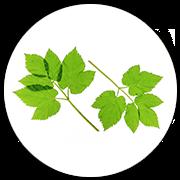 Zephrofel - ingredientes - funciona - como tomar
