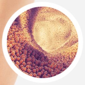 No1 ProBiotic - como tomar - ingredientes - funciona